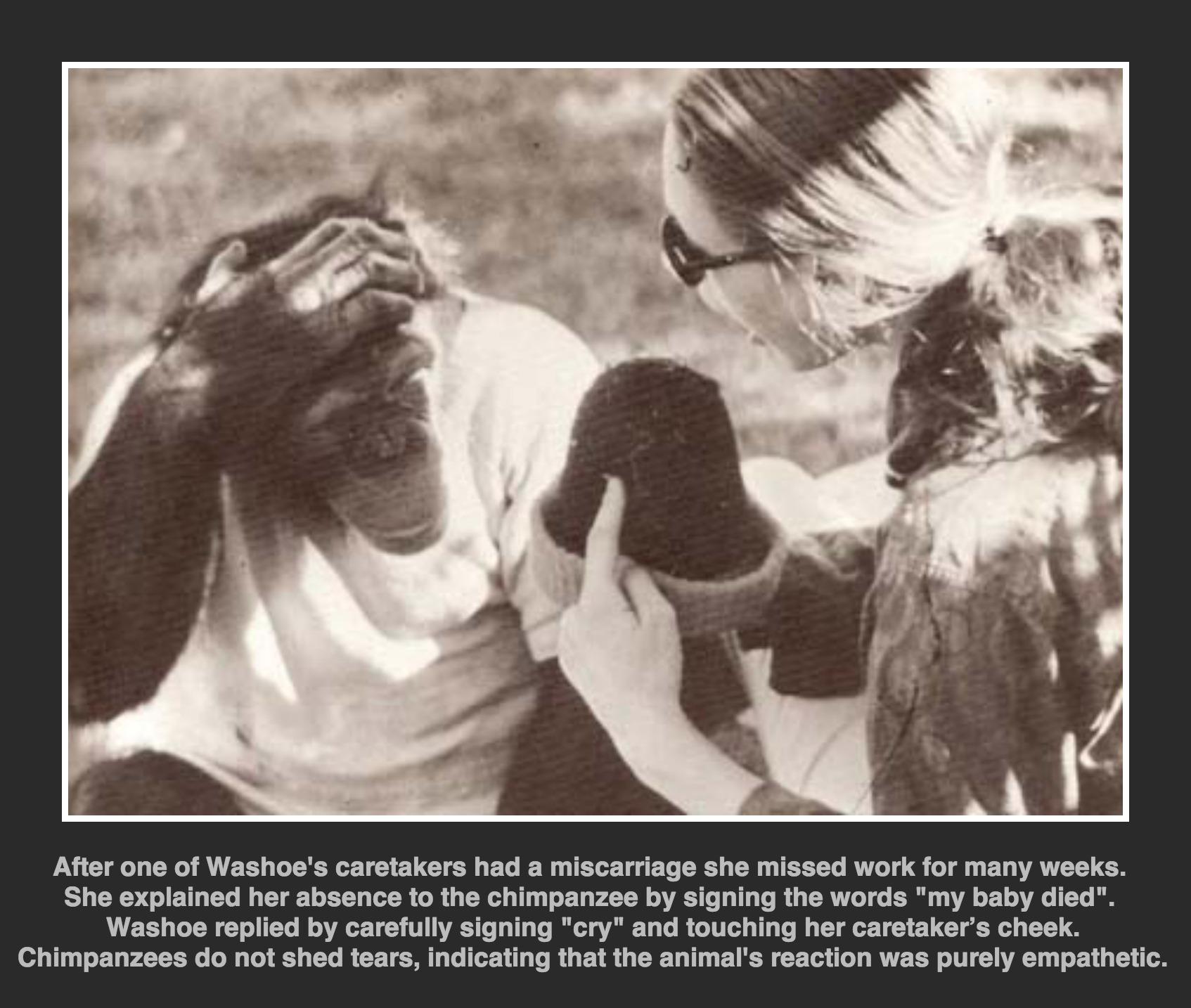 χιμπατζής μωρό