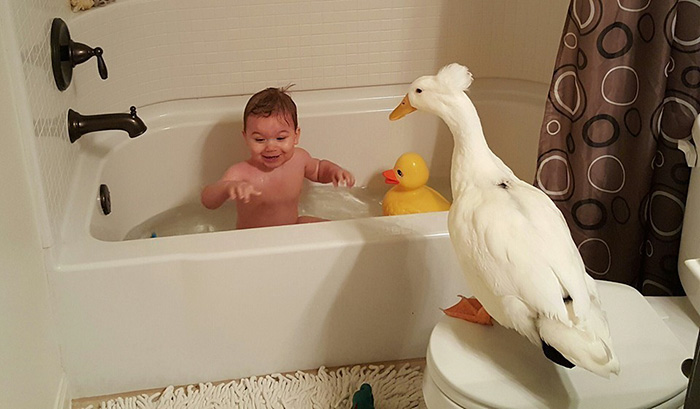 pet duck boy best friends mr t and bee tyler young 1