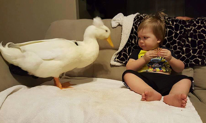 pet duck boy best friends mr t and bee tyler young 15