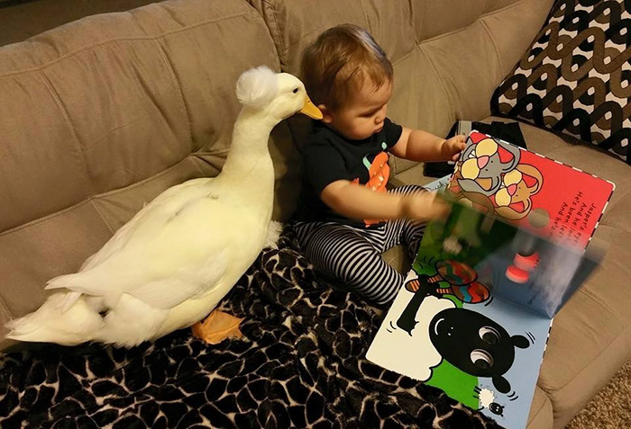 pet duck boy best friends mr t and bee tyler young 2