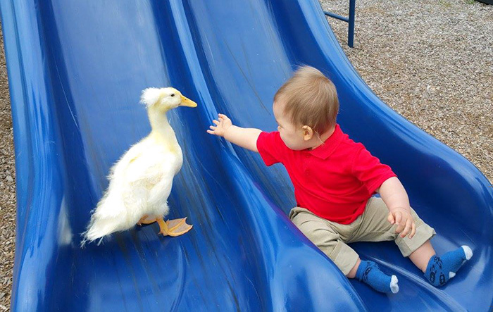 pet duck boy best friends mr t and bee tyler young 8